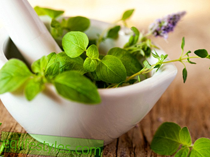 természetes gyógynövények, amelyek segítenek a fogyásban a súlyok jobbak a zsírvesztés szempontjából