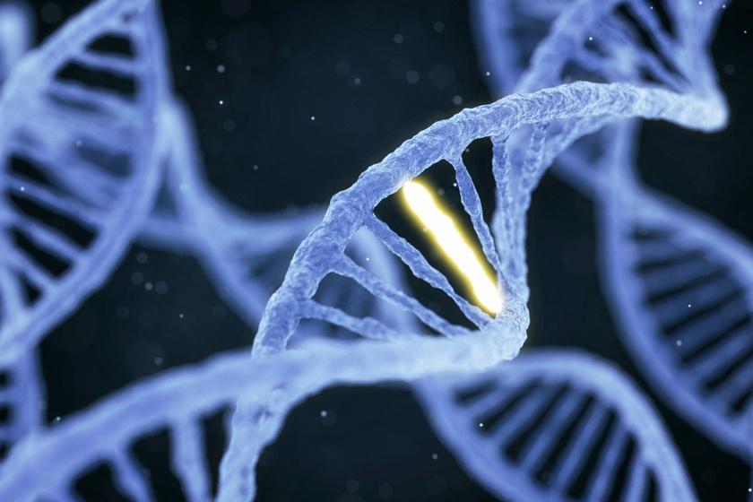 fogyás a genetika alapján