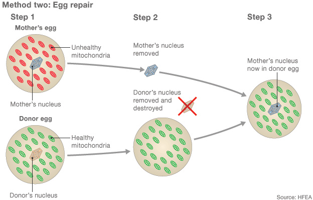 bio szinergia test tökéletes zsírégető vélemények testsúlycsökkenés 50 év felett