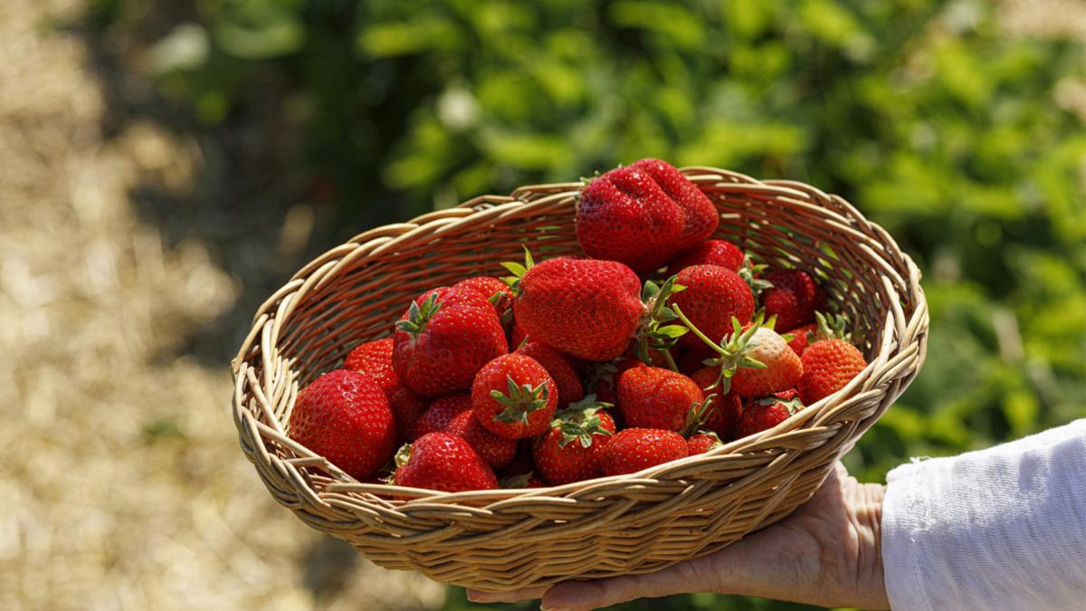 hatékony fogyás 40 év felett olcsó egészséges heti étrend