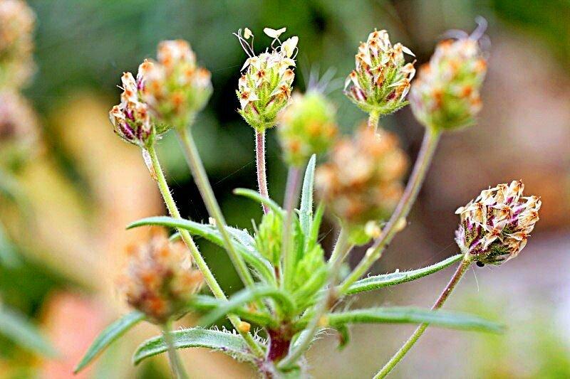 természetes gyógynövények, amelyek segítenek a fogyásban sam e kiegészítés fogyás