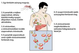 a hiv fogyás korai tünetei