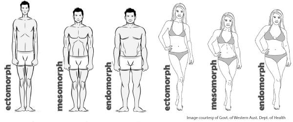 zsírvesztés testtípus meddig veszíti el a testzsírt