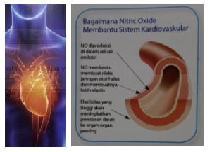 hidrolizált kollagén fogyás vélemények