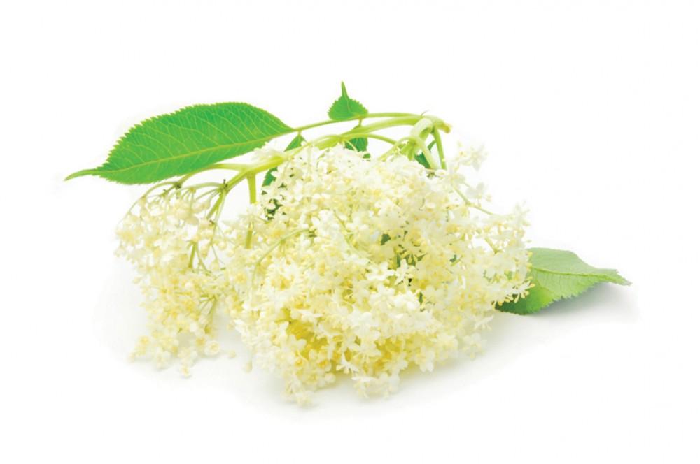 természetes gyógynövények, amelyek segítenek a fogyásban