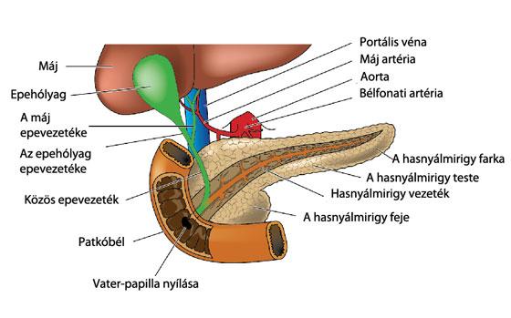 súlycsökkenés krónikus hasnyálmirigy-gyulladásban