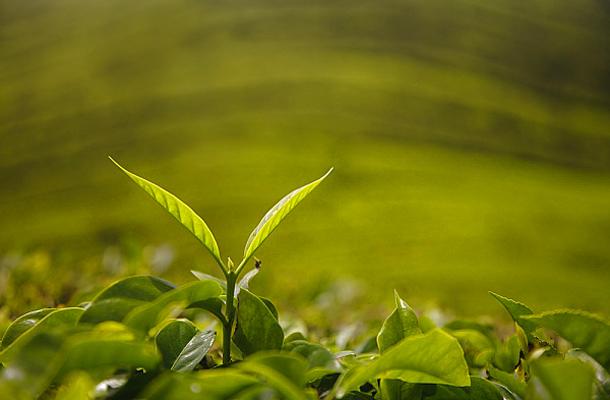 legjobb fogyás fogyókúrás tea