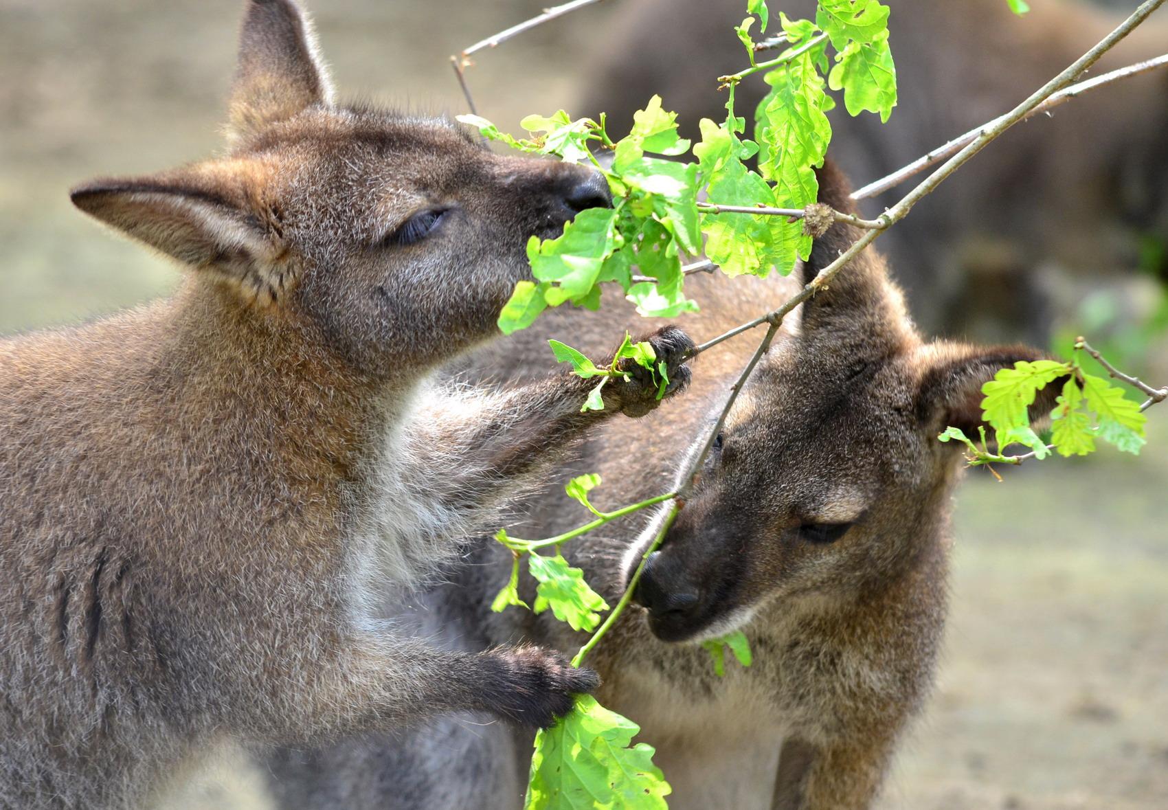 Kangoo Jumps - legyél te is kenguru!
